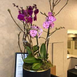 Orchid Plant B