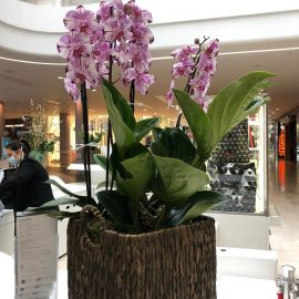 Orchid Plant G